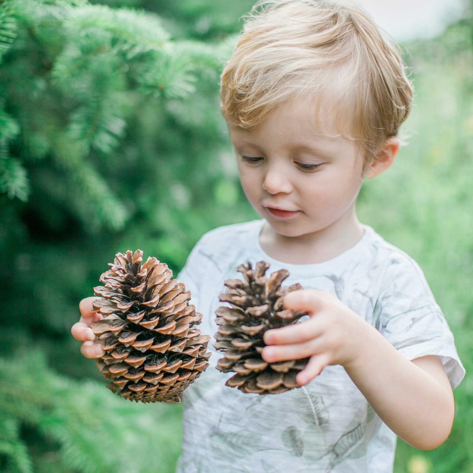 Little boy holding fir cones at a Christmas tree farm