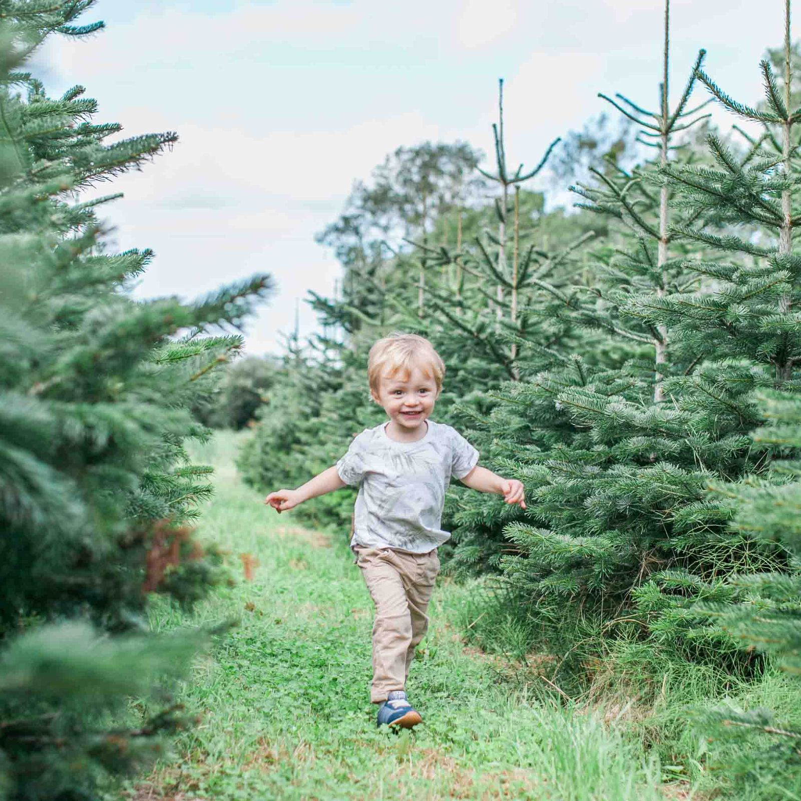Little boy running through rows of Christmas trees