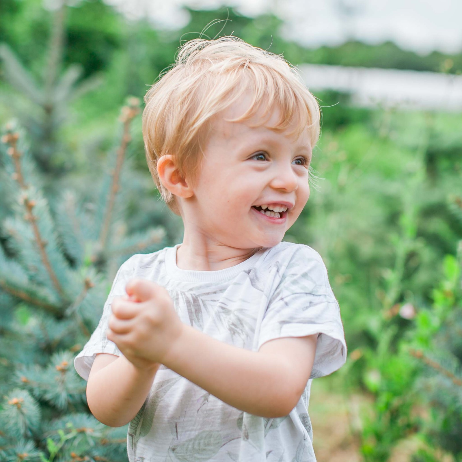 Little boy laughing amongst the trees at a Christmas tree farm