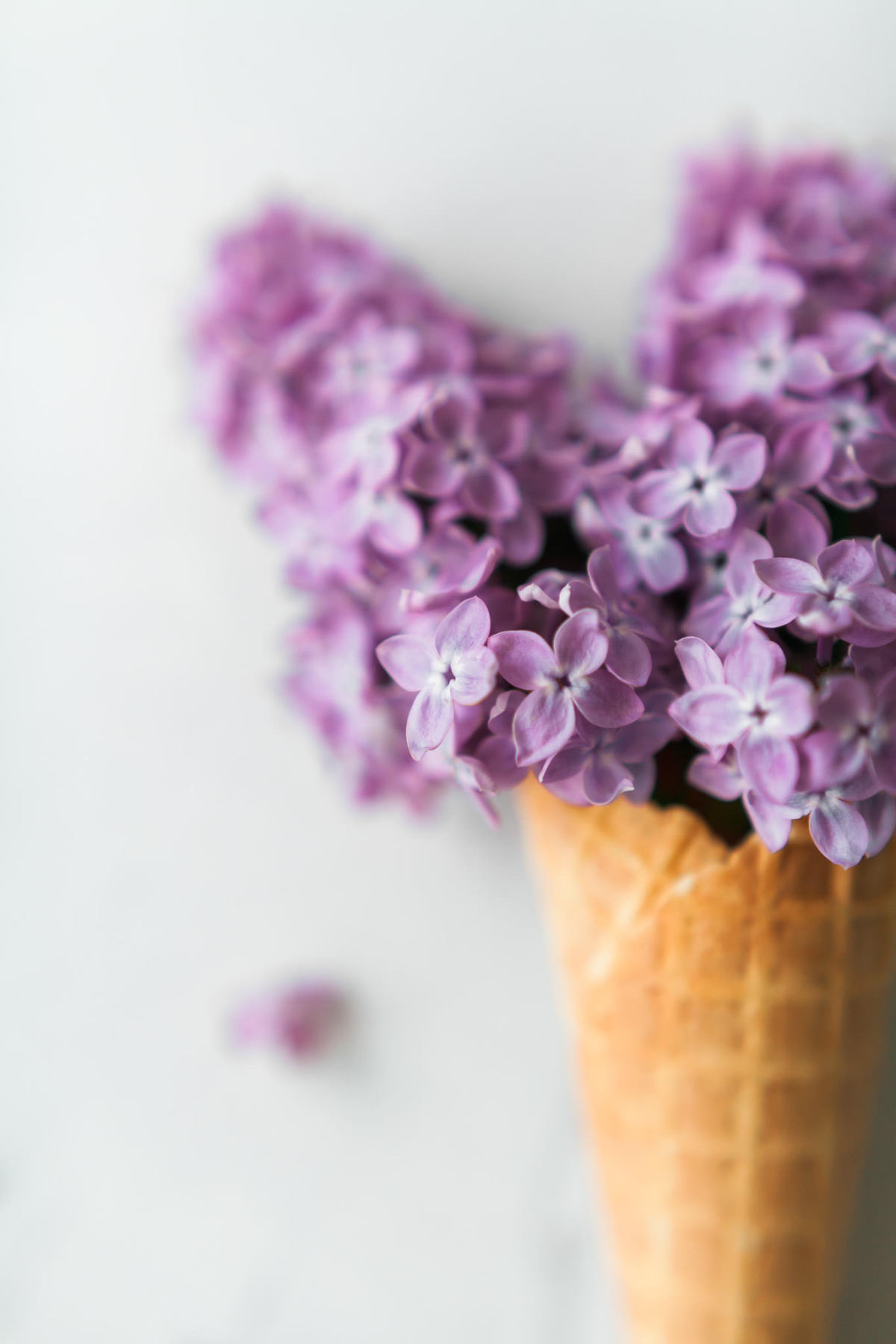 Product photography showing pink lilacs in a waffle ice cream cone